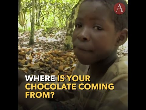 The Harsh Realities of Child Laborers in the Cocoa Industry