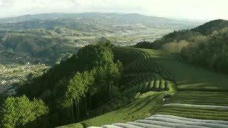 Tea field from the sky in Wazuka Kyoto