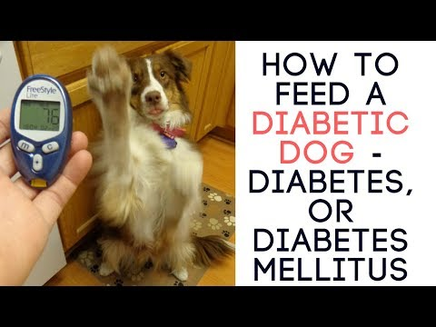 How To Feed A Diabetic Dog - Diabetes, Or Diabetes Mellitus