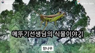 2020 서울국유림 : (식물이야기) 향나무