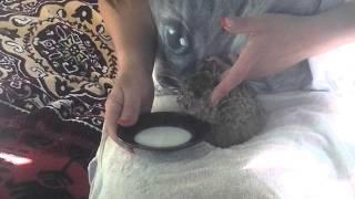 Кормим раненого маленького зайчонка (зайчик Потапка)