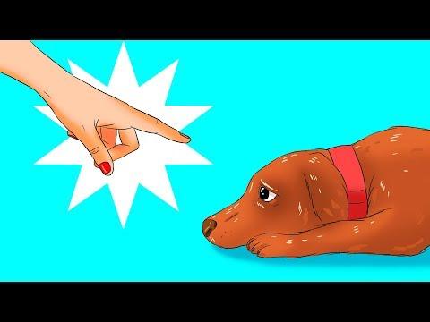 Как согреть собаку