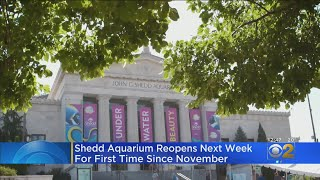 Shedd Aquarium, Field Museum Reopening After Closing For Months Due COVID-19 Restrictions
