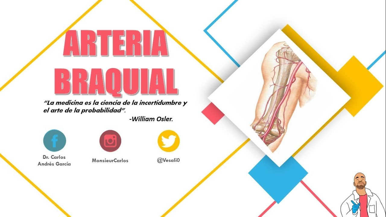 Anatomía - Arteria Humeral (Origen, Trayecto y Relaciones, Ramas ...