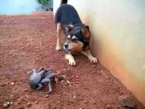 Dog & Coconut crab