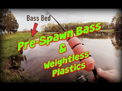 Pre-Spawn Pond Bass Fishing Tips with Weightless Plastics