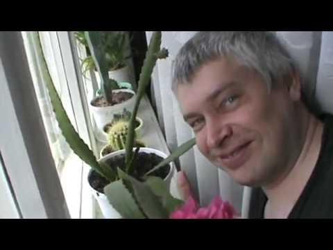видеоприкол цветя