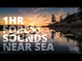 1 Hr Forest Sounds Near Sea