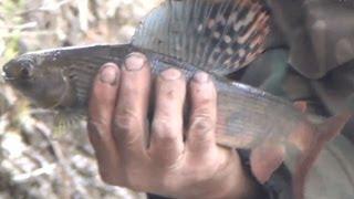 Хариус ломает удочку. Ловля хариуса. Видео высокой чёткости. Рыбалка. grayling Рыбалка ловля хариуса