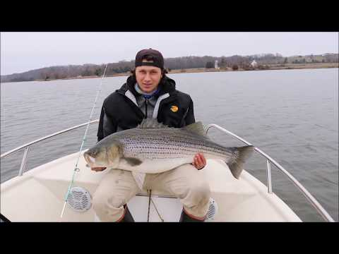50 inch STRIPED BASS Smashes small jerkbaits + 40 pounder brakes my NET!