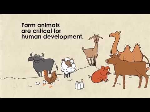 Sustainable Livestock, Sustainable Lives