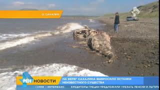 На берег Сахалина выбросило останки неизвестного гигантского существа