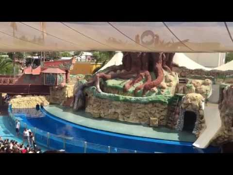 Sea Lion Show Zoomarine Portugal 2015