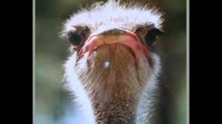 Alejandrin - Las Adivinanzas De Teresito (El Animalito)