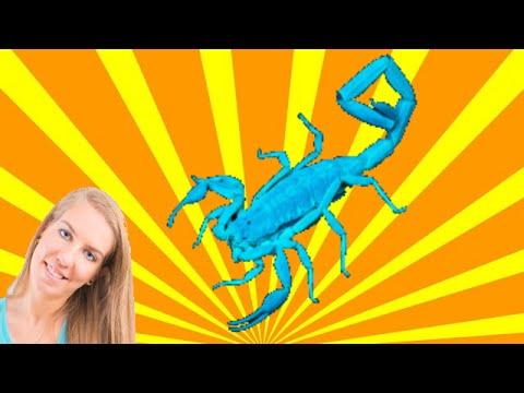 Sternzeichen Skorpion, Wie ist der Skorpion Mann, wie die Skorpionfrau?