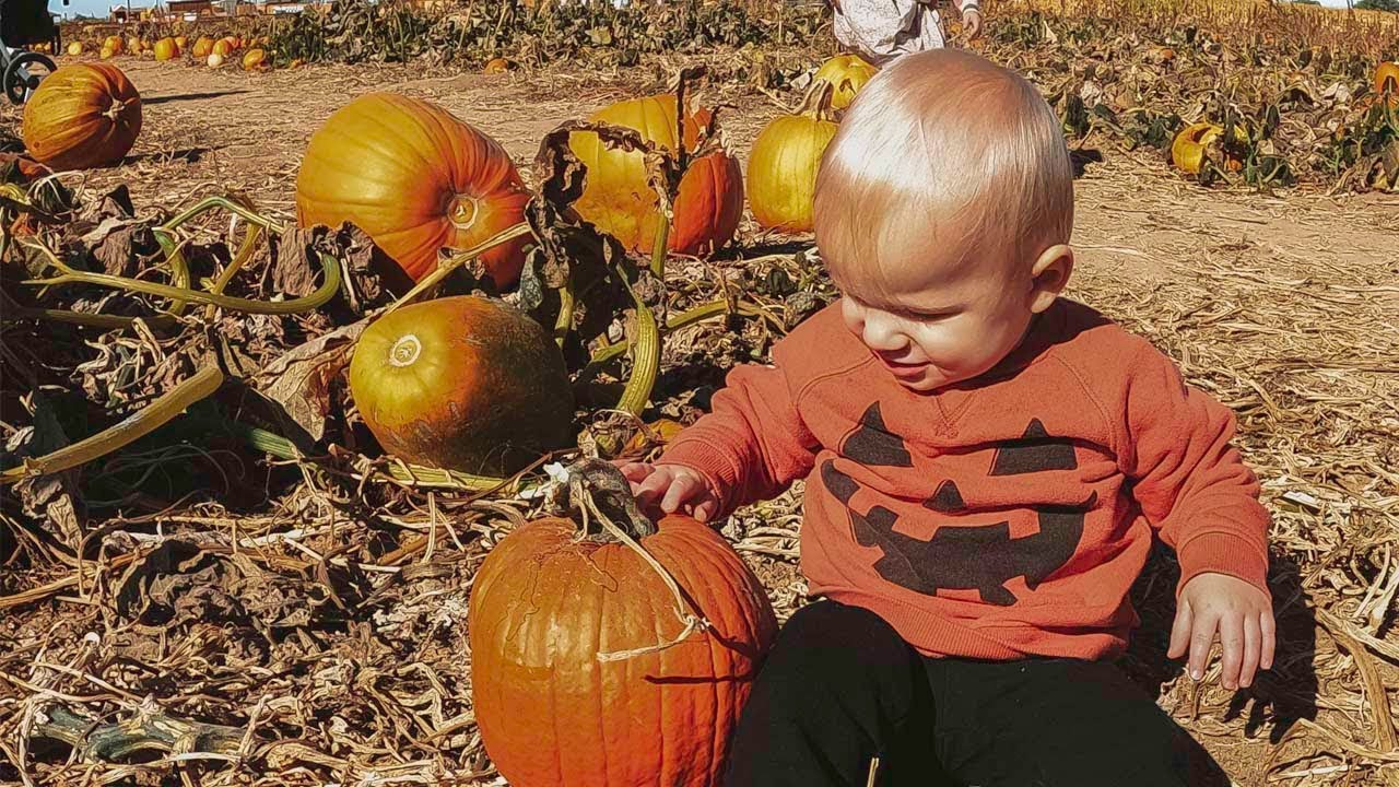 Baby Tabor's First Pumpkin!