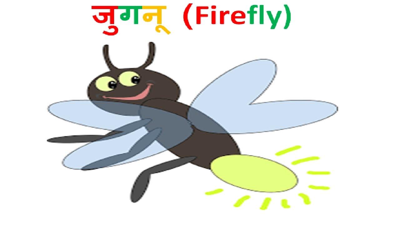 ज गन क स चमकत ह How Fireflies Glow Hindi