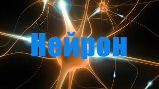 Нервная система. Нейрон.