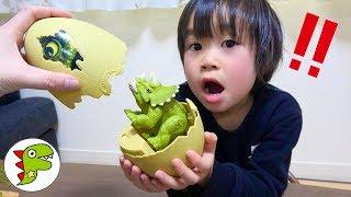 アンパンマンが恐竜に隠された?恐竜のタマゴから赤ちゃんが生まれるよ!トイキッズ