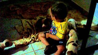 Ataque de Pit Bull a criança de 1 ano em Morrinhos-Go