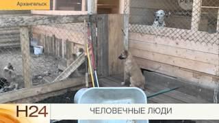 Приют животных