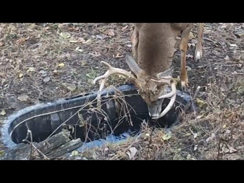 How To Bowhunt Deer During HOT Weather