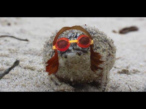 It Is Frogday My Dudes Bbc Desert Rain Frog Parody Youtube