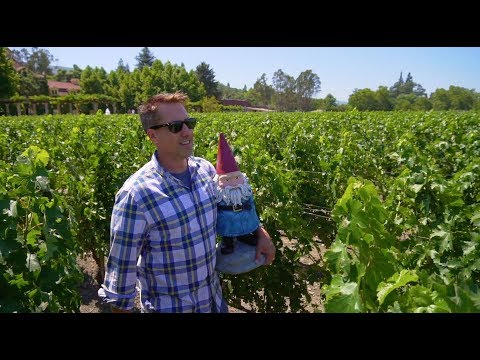 Ride on the Napa Valley Wine Train with HLN's Bob Van Dillen and the Roaming Gnome