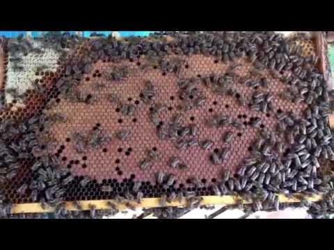 Karniyol Arıların Kontrolü