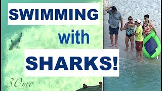 WATCH: Sharks swim too close to Swimmers at Pensacola Beach