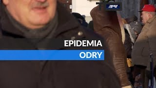 TO WIDEO. Epidemia odry