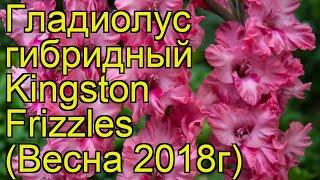 Гладиолус гибридный (Kingston Frizzles). Краткий обзор, описание характеристик, где купить луковицы