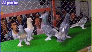 Gambar cover ANKARA SİTELER - Güvercin İhalesi