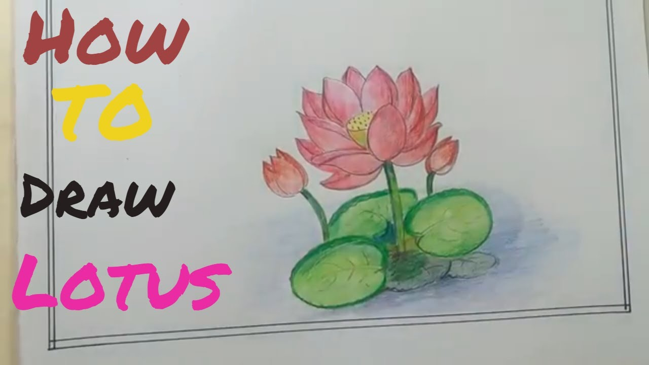 How To Draw Flowers Of Lotus And Coloringdraw Lotus Flower Step By