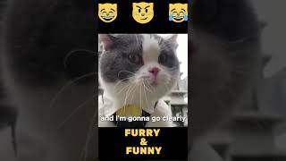Funny Cats OMG So Cute   Best Cat Videos #1  #SHORTS
