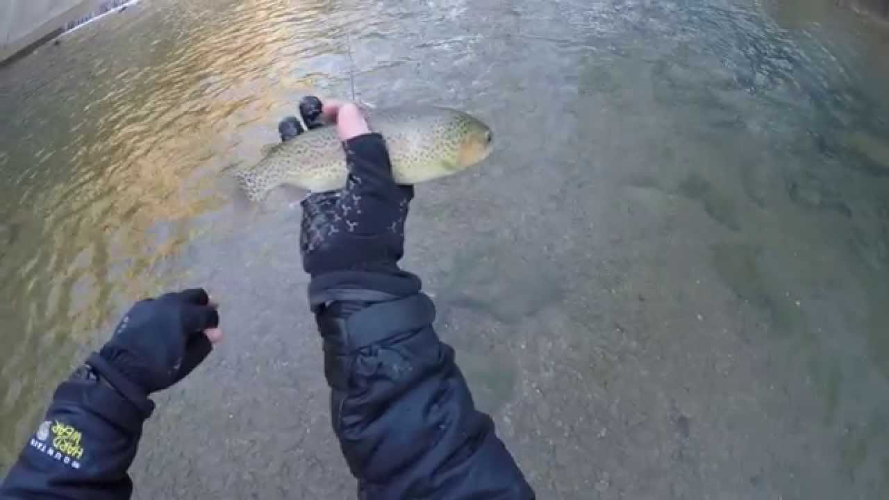 Red river gorge fly fishing indian creek swift camp for Fly fishing kentucky