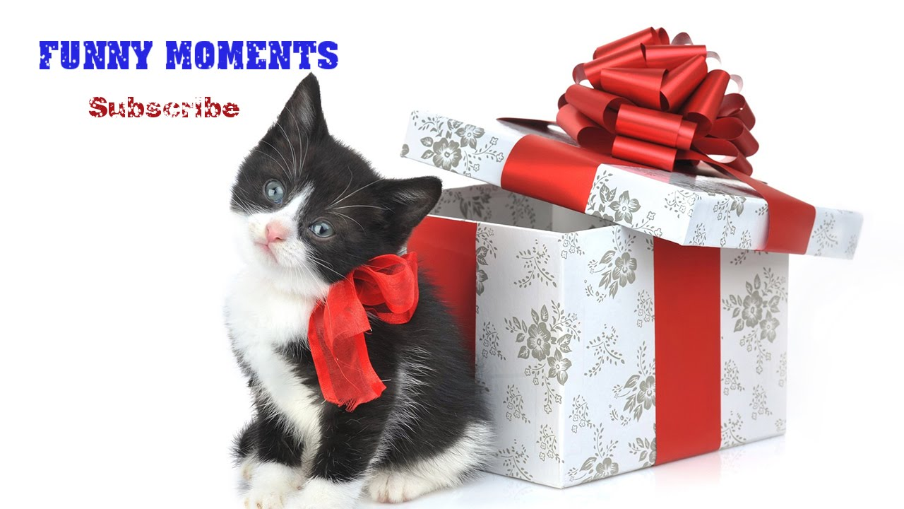Getting a Kitten for Christmas Compilation 2014-2015 [HD] - YouTube