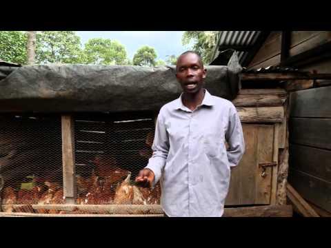 Juhudi Journeys   Chicken Farming with...