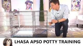 Lhasa Apso Potty Training from WorldFamous Dog Trainer Zak George   Potty Train a Lhasa Apso Puppy