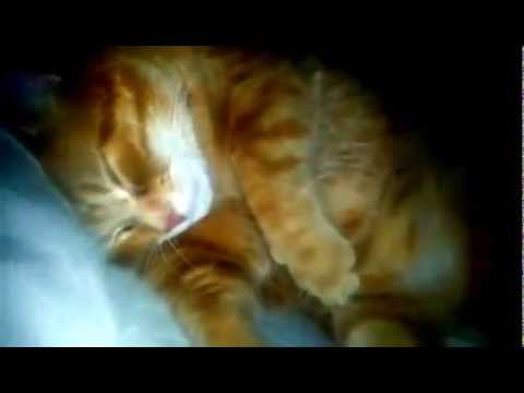 Cat sleeps on pillow, snores, keeps human awake