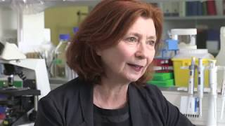 Découverte : freiner la maladie d'Alzheimer grâce à une thérapie génique