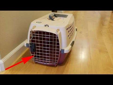 Люди взяли котёнка из приюта, а в переноске обнаружили ещё кое-что