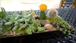 DIY | Easy Succulent Garden