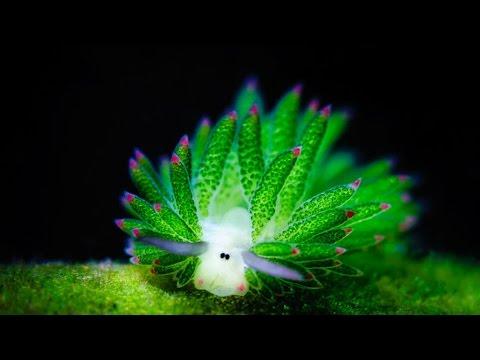 Очаровательные и интересные создания.