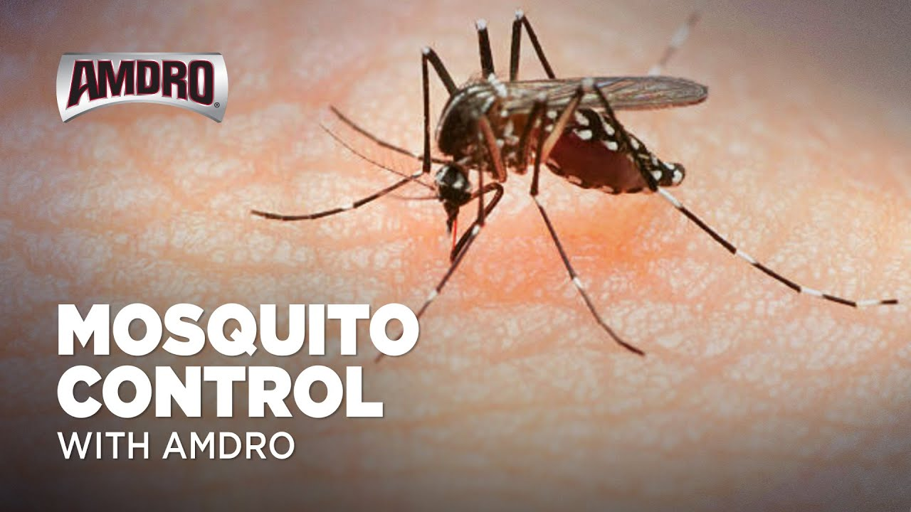 How to get rid of mosquitoes. Practical advice 42