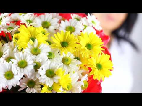 Giving Daisy Flower - Stock Footage | VideoHive 9638574