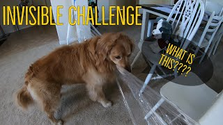Golden Retriever Invisible Challenge | Oshies World