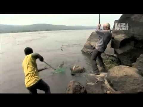 ฝรั่งโหดตกปลาเสืิอ 11 ตัว