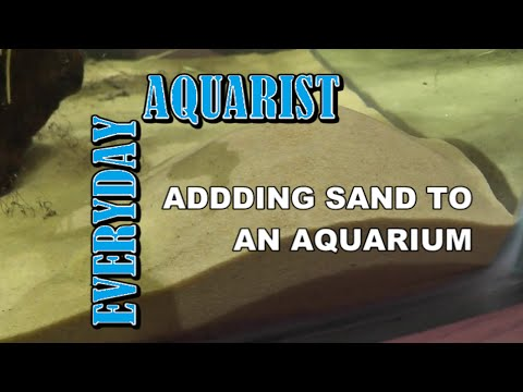 2 Tips For Cleaning And Adding Sand To An Aquarium
