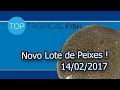 Top Tropical Fish - Novo Lote de Peixes  - 14/02/2017